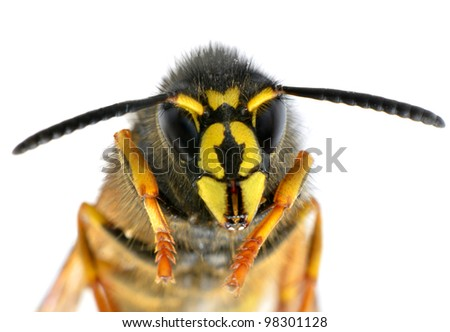 Ultra Macro on Bee Head with Antennas isolated on White Background - stock photo