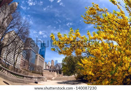 Ultra wide angle view of Michigan Ave, Chicago, juxtaposed against the vibrant yellow of spring-flowering forsythia. - stock photo
