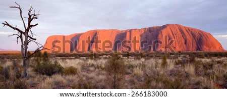Uluru - Ayers Rock. Aboriginal sacred place. UNESO world heritage. Sunrise sun is color painting red sandstone rock. PR available - image approved for commercial use by Park authorities.  - stock photo