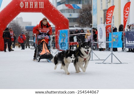 Ulyanovsk, Russia - February 15, 2015. Volga Quest Sled dog race 2015. Team of two dogs started race.