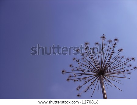 umbrella blue - stock photo