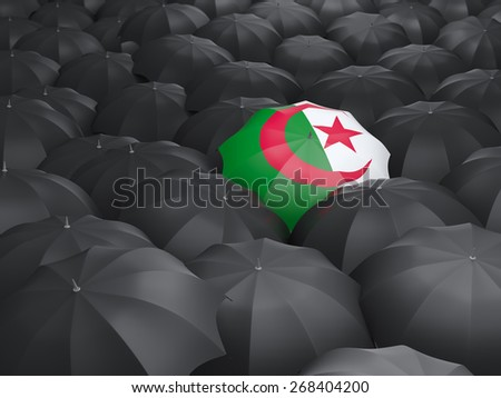 Umbrella with flag of algeria over black umbrellas - stock photo