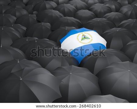 Umbrella with flag of nicaragua over black umbrellas - stock photo