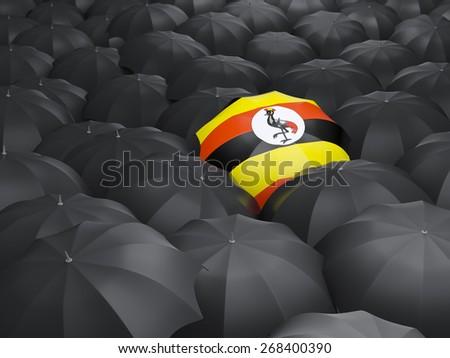 Umbrella with flag of uganda over black umbrellas - stock photo