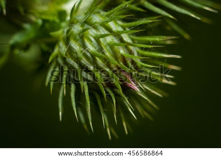 Unblown flower thistle, prickly weed and unusual. - stock photo