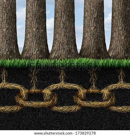 Unbreakable solidarity and teamwork cooperation concept as a group of trees connected underground with strong roots shaped as chain links as a business friendship metaphor and partnership success. - stock photo