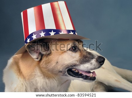 Uncle Sam Dog. - stock photo