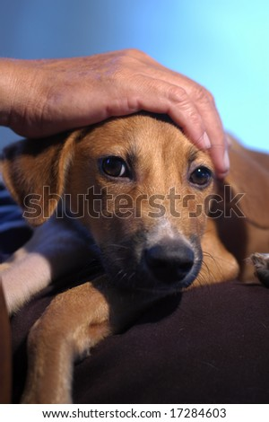 Unconditional Love - stock photo