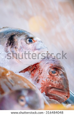 Uncooked Delicious fresh fish on ice on market store shop. Dorado fish on ice - healthy food, diet or cooking concept