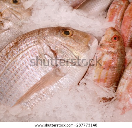 Uncooked dorado with other kinds of fish in ice