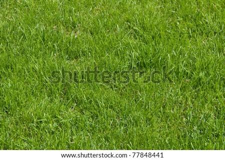 Uncut grass field - stock photo