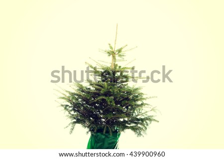 Undecorated christmas tree
