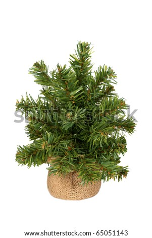 Undecorated Christmas tree - stock photo