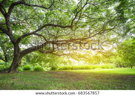 Under big tree in the garden , warm light effect