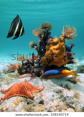 Under sea in the Caribbean with colorful marine life, starfish and tropical fish - stock photo