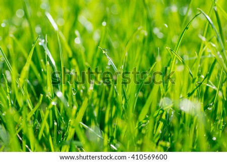 Under the bright sun. Abstract natural backgrounds - stock photo