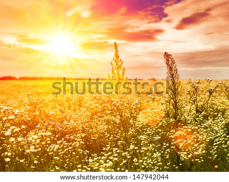Under the evening sun, abstract natural backgrounds with wild flowers - stock photo