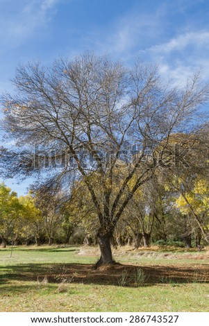 under tree with branches without leaves in autumn