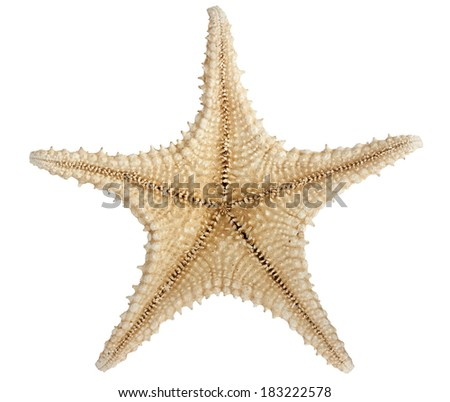 Underside of star fish isolated on white with a clipping path - stock photo