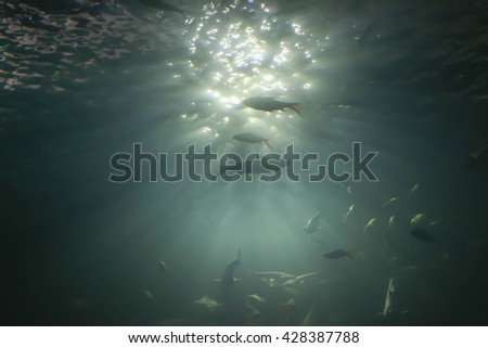 Underwater abstract pattern. Sun shining trough water sea surface full of little fish and air bubbles