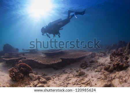 underwater activity on a healthy reef - stock photo
