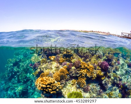 Underwater and surface split view in the tropics paradise with fish and coral reef, above waterline, beautiful view on pier on red sea. Egypt, snorkeling vacation concept