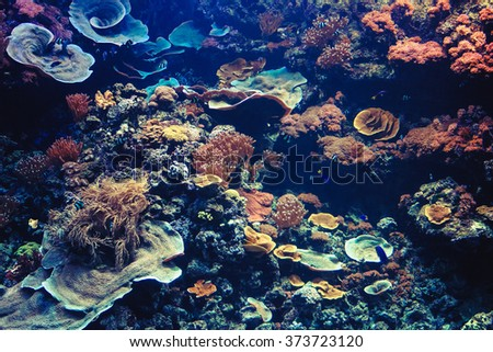 Underwater Background. Tropical Aquarium with Small Fishes and Corals. - stock photo