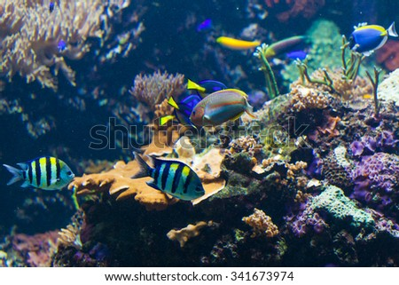 underwater background.  Underwater photo
