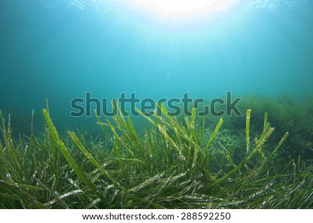 Underwater background with seaweed - stock photo