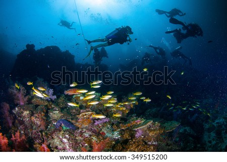 Underwater Blue Sea and scuba diver diving with school fish  - stock photo