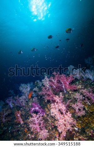 Underwater Blue Sea and soft coral against sun  - stock photo