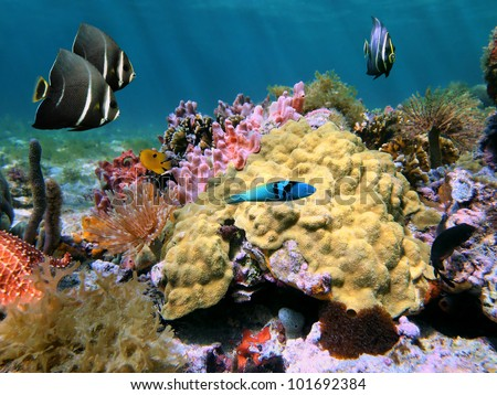 Underwater colorful sea life with Mustard Hill coral and tropical fish on a seabed of the Caribbean sea, Costa Rica - stock photo
