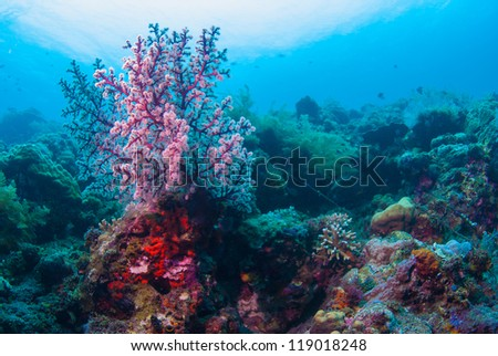 Underwater coral, fish, and plants Bali, Indonesia - stock photo