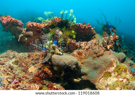 Underwater coral, fish, and plants Bali, Indonesia