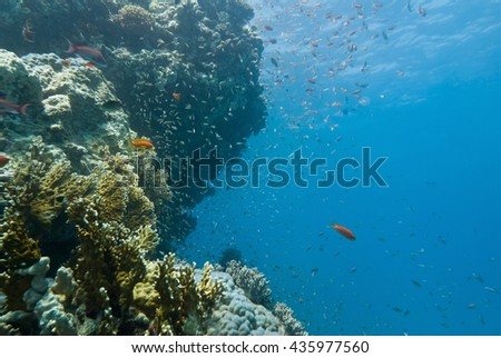Underwater coral landscape. Wide angle, shot in shallow tropical waters
