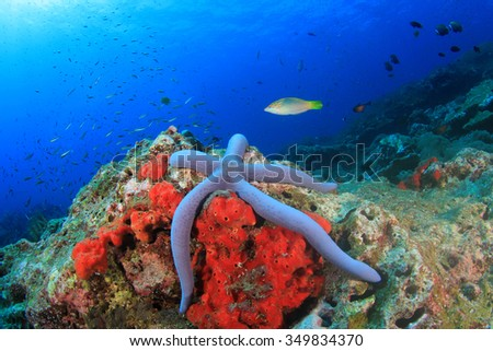 Underwater coral reef and fish: Blue Starfish - stock photo