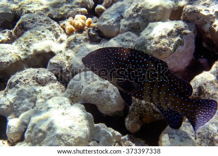 Underwater Coral Reef and Tropical Fish in Ocean - stock photo