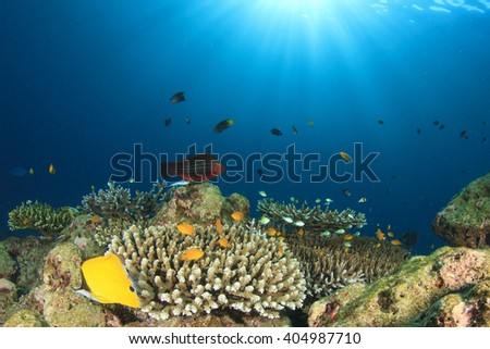 Underwater coral reef in sea with tropical fish