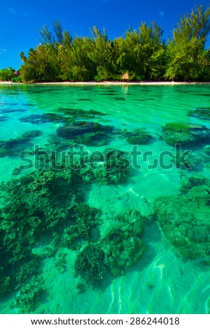 Underwater coral reef next to green tropical island on Moorea, French Polynesia - stock photo