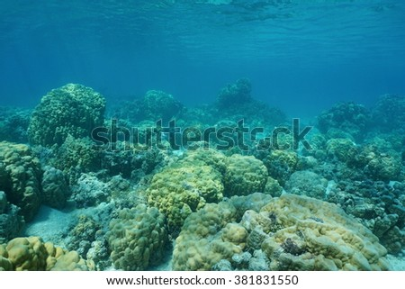 Underwater coral reef on shallow ocean floor with massive lobe corals, lagoon of Huahine island, Pacific ocean, French Polynesia - stock photo