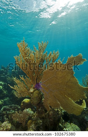 Underwater coral reef scene off the coast of Roatan Honduras