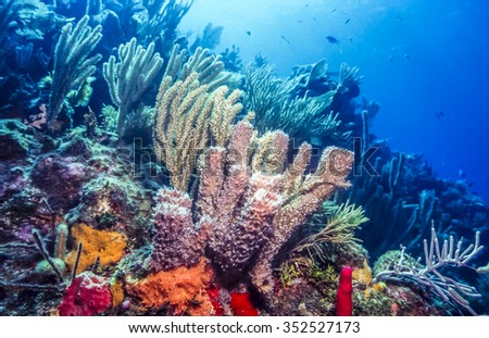 Underwater coral reef scene with purple tube sponges off the coast of Bonaire