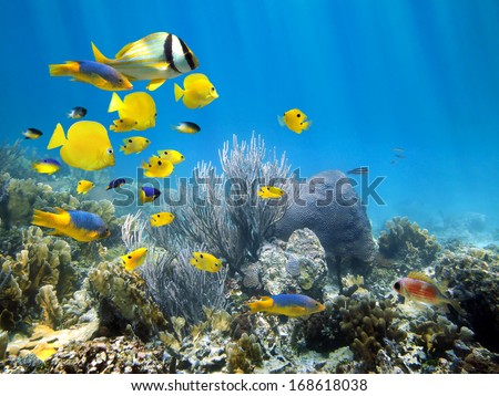 Underwater coral reef scenery with colorful school of fish - stock photo