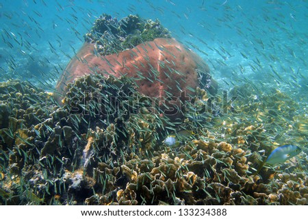 Underwater coral reef with shoal of juvenile fish in the Caribbean sea - stock photo