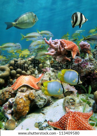 Underwater coral reef with starfish and school of colorful fish beneath the water surface - stock photo
