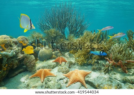 Underwater coral reef with starfish and tropical fish, Caribbean sea - stock photo