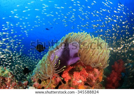 Underwater coral reef with tropical fish in ocean - stock photo