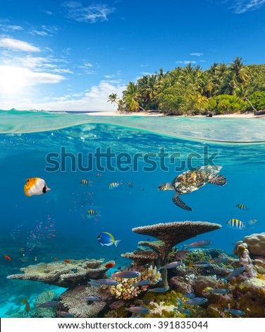 Underwater coral reef with tropical island - stock photo