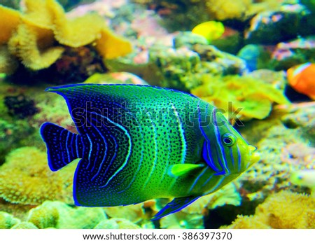 underwater corals and tropical fish - horizontal - stock photo
