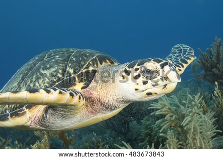 Underwater Endangered Sea Turtle